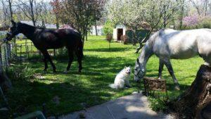 konner-horses